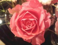 お花でカラーを取り入れる