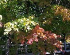 街中に補色が増えてくる季節!心と体のバランスを取りましょう!