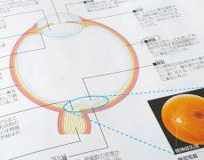 色彩検定合格に向けて・・・眼の構造と働きを知る