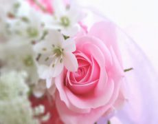 色に想いを込めて~ピンク&ホワイト~